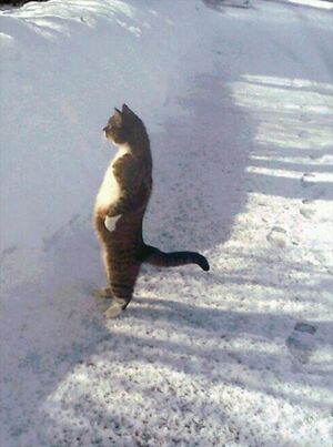 Cat Standing in the Snow: blank meme template (no caption)