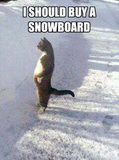 Cat Standing in the Snow meme #3