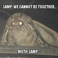 Moth Lamp meme #3