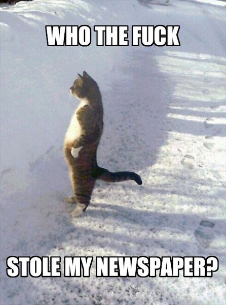File:Cat Standing in the Snow meme 4.jpg
