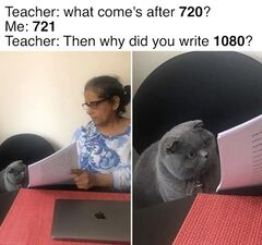 Woman Showing Papers to Grey Cat meme #1