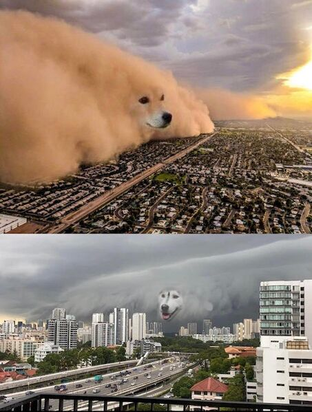 File:Dust Storm Dog (2 panel).jpg