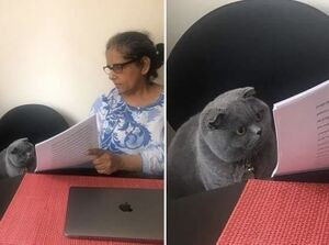 Woman Showing Papers to Grey Cat: blank meme template