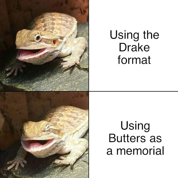 File:Butter the Bearded Dragon meme 3.jpg